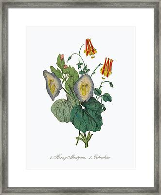 Horny Martynia And Columbine Framed Print by Peacock Graphics
