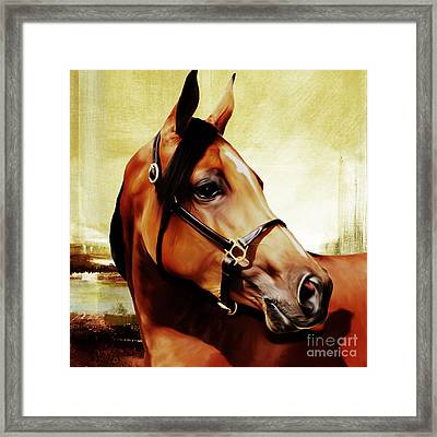 Horse # 341 Framed Print by Gull G