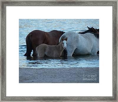 Horse 9 Framed Print