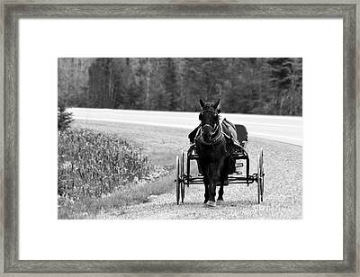 Framed Print featuring the photograph Horse And Buggy by Marjorie Imbeau
