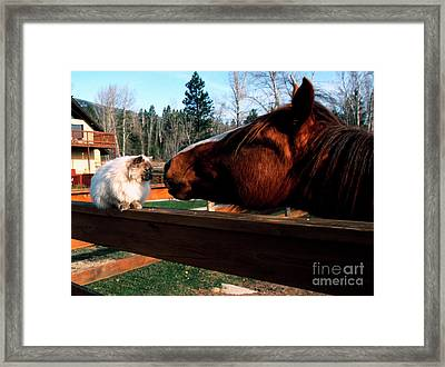 Horse And Cat Nuzzle Framed Print by Thomas R Fletcher