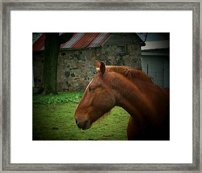 Horse And Shed Framed Print by Michael L Kimble