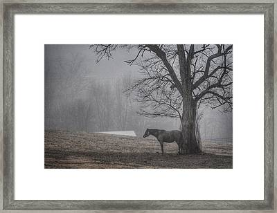 Framed Print featuring the photograph Horse And Tree by Sumoflam Photography