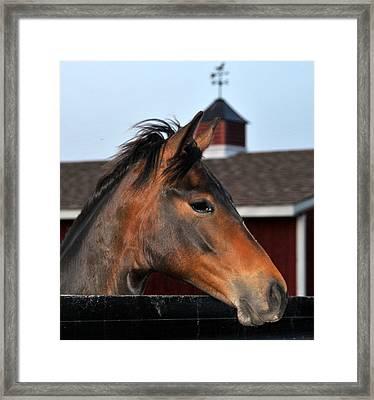 Horse Framed Print by Brian Foxx
