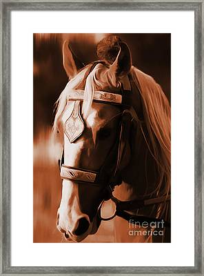 Horse Close View Framed Print by Gull G
