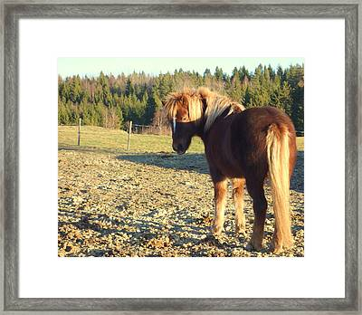 The Horse Is Waiting For The Green Grass To Come  Framed Print by Hilde Widerberg