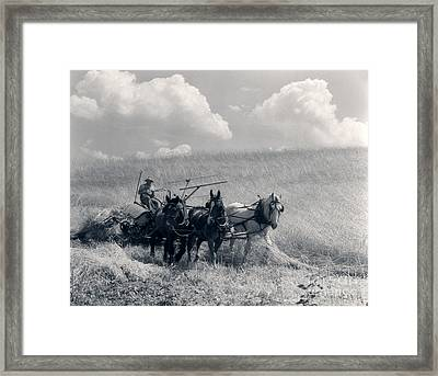 Horse-drawn Wheat Harvesting, C.1920-30s Framed Print by H. Armstrong Roberts/ClassicStock