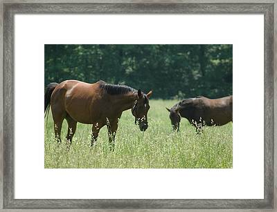 Horse Dreams Tall Grass Framed Print by William A Lopez