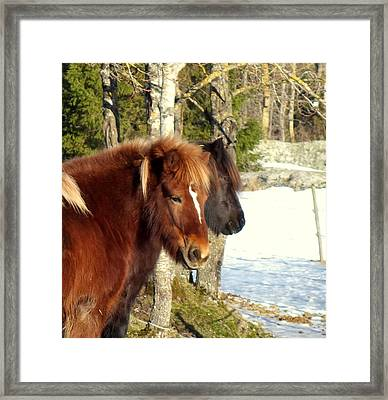 Horses With Peace In Their Mind  Framed Print by Hilde Widerberg