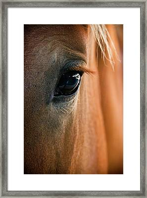 Horse Eye Framed Print by Adam Romanowicz