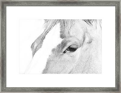 Horse Eye Black And White Framed Print