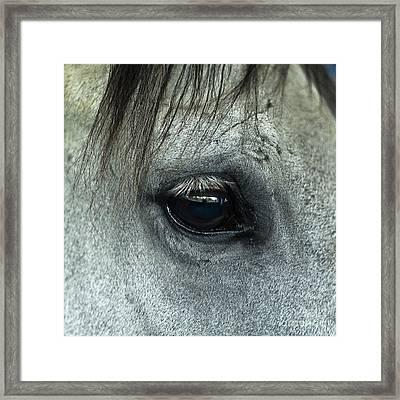 Horse Eye Framed Print by John Greim