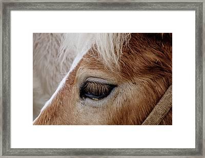 Horse Eye Framed Print by Okan YILMAZ