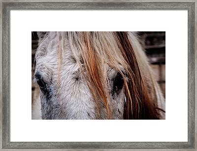 Horse Eyes Framed Print by Okan YILMAZ