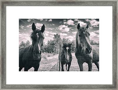Horse Family Framed Print