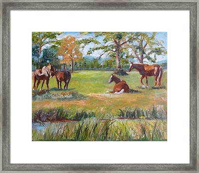 Horse Farm In Georgia Framed Print