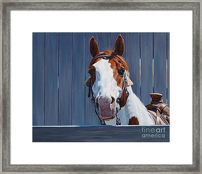 Horse Fence Framed Print by Michelle Grant