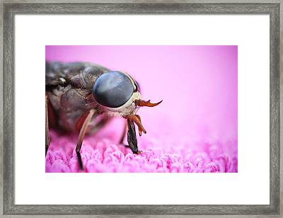 Horse Fly Framed Print by Ryan Kelly