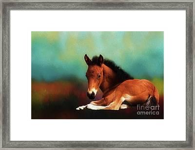 Horse Foal Framed Print