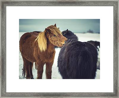 Horse Friends Forever Framed Print