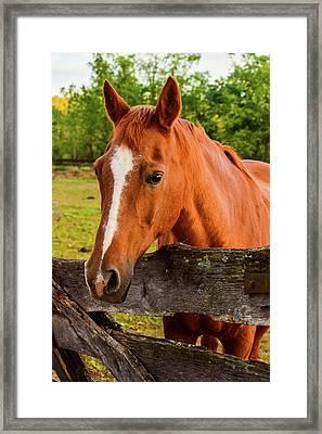 Horse Friends Framed Print
