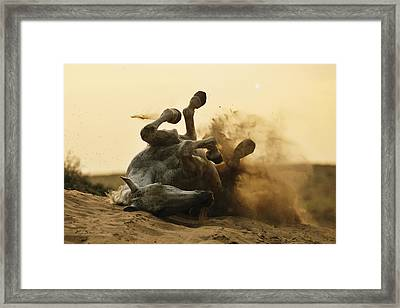 Horse Game Framed Print
