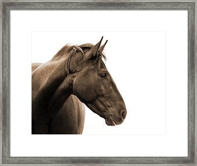Horse Head Study Framed Print by Heather Swan