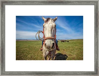 Horse Head Framed Print by Todd Klassy