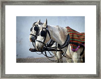 Horse Heads Framed Print by Carlos Caetano