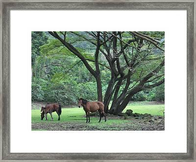 Horse Heaven Framed Print by Charles  Jennison