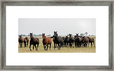 Horse Herd On The Hungarian Puszta Framed Print