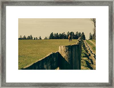Horse In A Pasture Framed Print