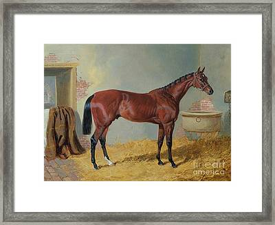 Horse In A Stable Framed Print by John Frederick Herring Snr