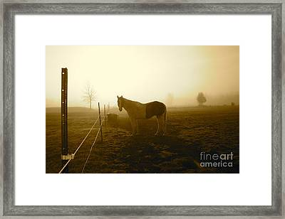 Horse In Autumn Photo By Valentina Miletic Framed Print by Valentina Miletic
