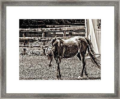 Horse In Black And White Framed Print by Annie Zeno