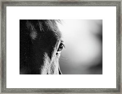 Horse In Black And White Framed Print by Malcolm MacGregor