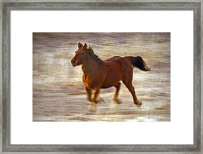 Horse In Motion Framed Print by James Steele