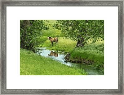Horse In Spring Pasture Framed Print