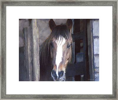 Horse In Stall Framed Print by Joe Halinar