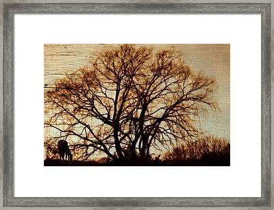 Horse In The Willows Framed Print