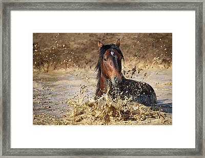 Horse In Water Framed Print by Vedran Vidak