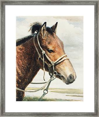 Horse Framed Print by Ji-qun Chen