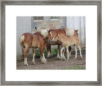 Horse Kiss Framed Print by Donna Bosela