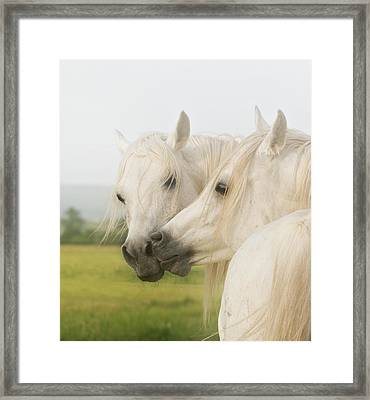 Horse Kiss Framed Print