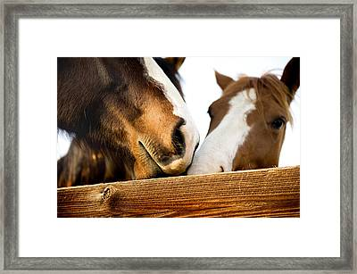 Horse Kisses Framed Print by Michelle Shockley