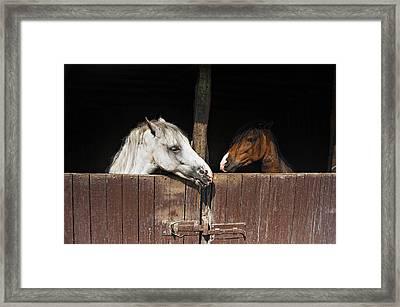 Horse Love Framed Print by Okan YILMAZ