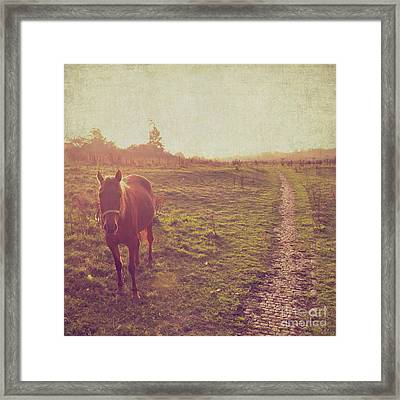 Horse Framed Print by Lyn Randle