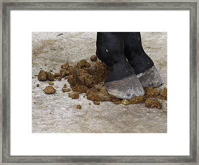 Horse Manure Framed Print