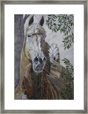 Framed Print featuring the drawing Horse by Melita Safran