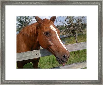 Framed Print featuring the photograph Horse by Michael Albright